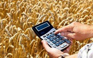 Алтайские предприятия получили господдержку на покупку элитных семян