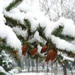 Погода 23 декабря в Алтайском крае: небольшой снег и до -11 градусов