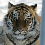 Барнаульский зоопарк проведет экскурсию для горожан