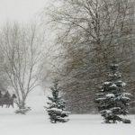 Метели и сильный порывистый ветер ворвутся в Алтайский край 24 декабря