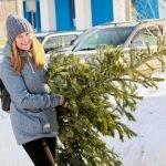 Онлайн и офлайн: где и почем можно купить живую ёлку в Барнауле