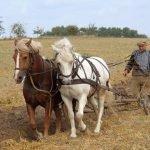 Малое фермерское хозяйство Томской области дополнительно получит 90 млн рублей