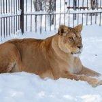 Барнаульцев приглашают на праздничный обед в зоопарк