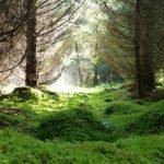 Экологи обвиняют Минприроды в срыве создания парка «Тогул» на Алтае
