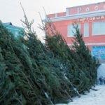 Где купить новогоднюю елку в Барнауле: сколько стоит и какое дерево лучше не брать