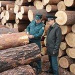 В 2019 году сибирский лес экспортировался в 56 стран мира