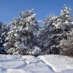 Погода 15 января в Алтайском крае: снег, метели и до -8 градусов