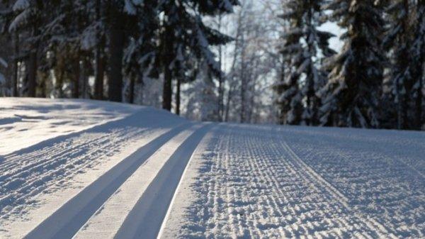 Автомобилисты сломали лыжню на Трассе здоровья в Барнауле