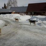 Барнаульская мэрия готова заплатить за отлов бездомных животных 2,3 млн рублей
