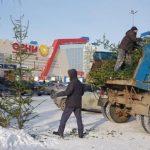 Завтра в Барнауле стартует сбор елок на переработку