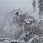 Погода 16 января в Алтайском крае: снег, метели, ветер и гололед