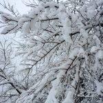 Погода 13 января в Алтайском крае: снег и около -7 градусов