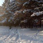 Крещенские морозы могут не прийти в Алтайский край