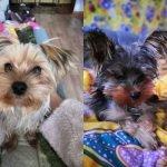 Жительница Барнаула подарила щенка девочке, потерявшей любимого питомца