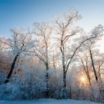 Погода 27 января в Алтайском крае: небольшой снег и до +2 градусов
