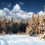 Погода 29 января в Алтайском крае: небольшой снег и похолодание