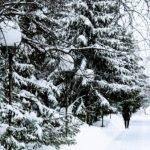 До -15. Какой будет погода в Алтайском крае 8 января
