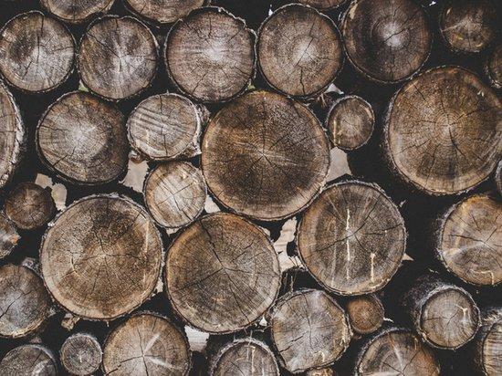 Россияне стали чаще покупать дрова