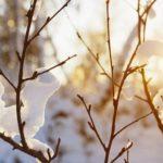 Самое время для зимних прогулок. О погоде в Алтайском крае четвертого января