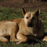 За отлов бездомных животных мэрия Барнаула заплатит 2,3 миллиона