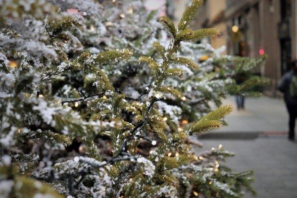 Где в Барнауле можно сдать новогодние елки