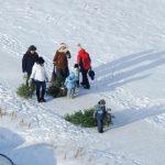 В Барнауле работают целых 40 точек приема хвойных деревьев
