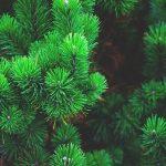 Куда в Барнауле сдать елку после Нового года