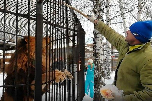 Барнаульцы попали на звериный обед в зоопарк