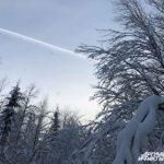 Экс-глава Белохуринского лесничества пойдет под суд из-за незаконных рубок