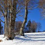 """В Приморье девочка врезалась в дерево и погибла во время катания с горы на """"плюшке"""""""