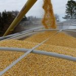 Алтайский край сократил экспорт зерна - СМИ