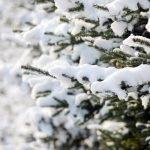 Погода 3 февраля в Алтайском крае: без осадков и до 0 градусов
