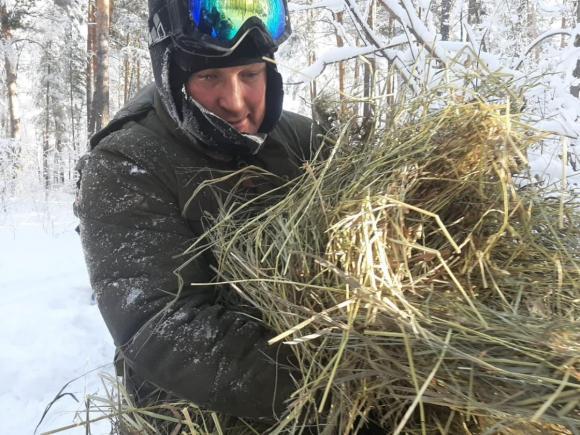 В Алтайском крае лесники подкармливают зверей вениками и солью (фото)