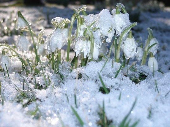 Потепление придет в Алтайский край