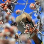Оттепель продолжается. Прогноз погоды в Алтайском крае на 14 февраля