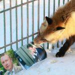 Животные-предсказатели назвали имя будущего мэра Барнаула