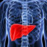 Врач рассказал о симптомах и профилактике жировой болезни печени