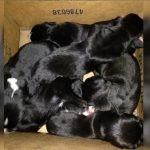11 щенков выкинули в мусорный бак в Барнауле