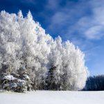 Погода 6 февраля в Алтайском крае: небольшой снег и до +6 градусов