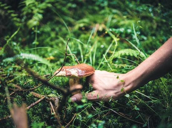 Полезность и ущерб: алтайский гастроэнтеролог сообщил правду о грибах