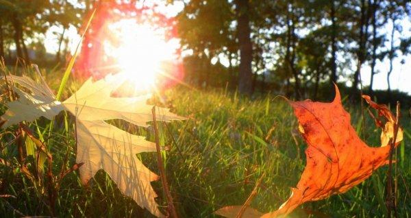 Успение Пресвятой Богородицы: традиции и приметы на 28 августа