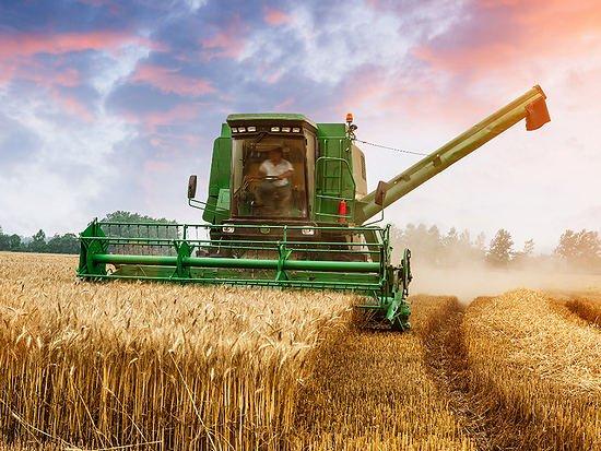 Аграрии Алтайского края обмолотили зерновые и зернобобовые культуры с 69% площадей
