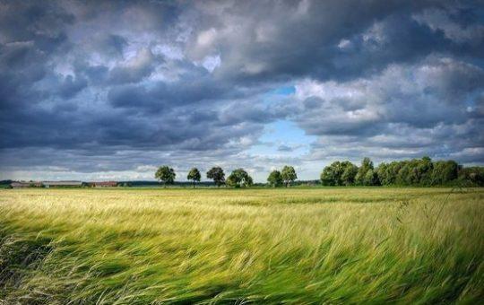 Алтайские аграрии собрали 4,7 млн тонн зерна