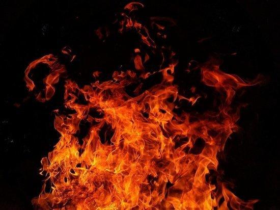 МЧС отработали тренировку ликвидации природного пожара под Барнаулом