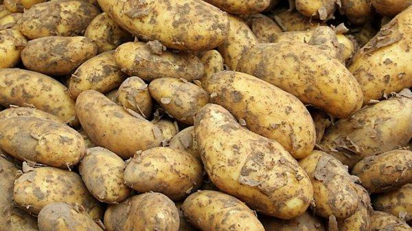 """""""Москву и Север кормим"""". Почему картофель на Алтае подорожал вдвое и что будет дальше"""
