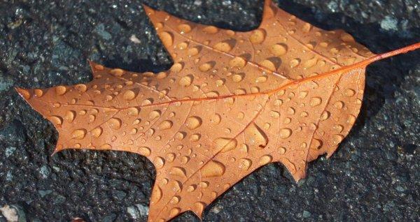 Небольшой дождь: о погоде в Алтайском крае 1 октября