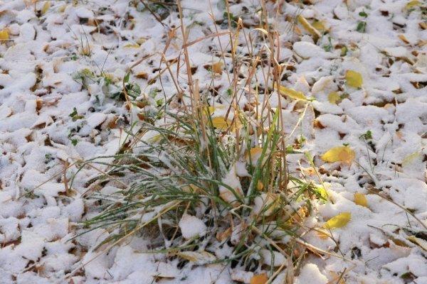 Первый снег на Алтае 2021: туристы сняли заснеженные холмы на Семинском перевале