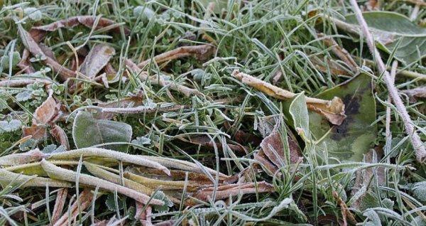 Похолодание до -5 градусов и снег прогнозируют в Алтайском крае