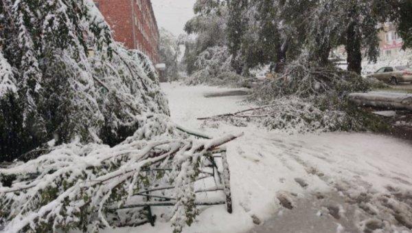 Сильный снегопад повалил сотни деревьев вКемерове (фото ивидео)