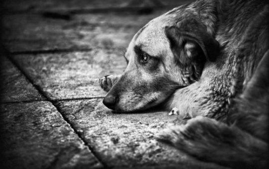 Соцсети: В Рубцовске мужчина скупает собак и ест их